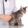 Ветеринарные клиники в Качуге